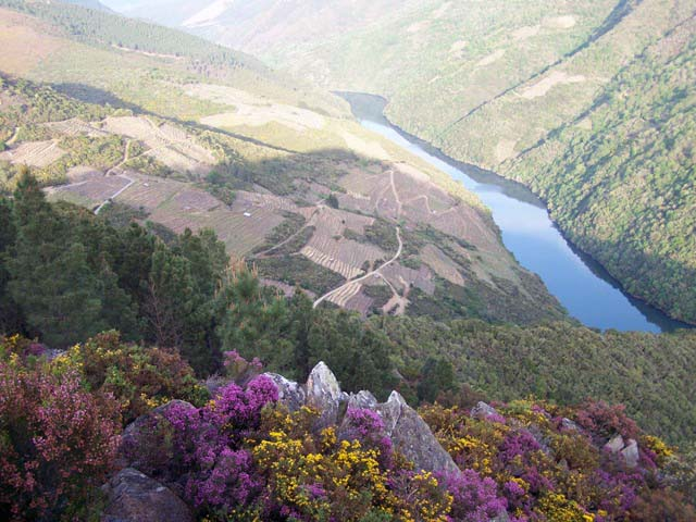 Viñas de Vilachá desde el Mirador da Capela - Foto de Peruchela