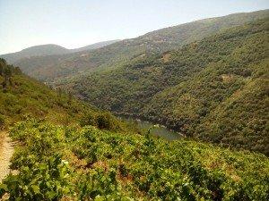 Viña Eivedo con vistas al Rio Sil