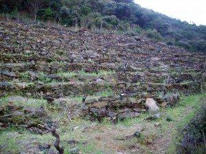Viña Val do Frade
