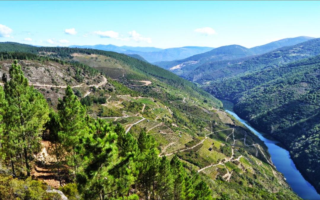 Por fin una investigación sobre los orígenes históricos de la viticultura en la Ribeira Sacra